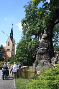 Führung an der 1000-jährigen Eiche von Nöbdenitz