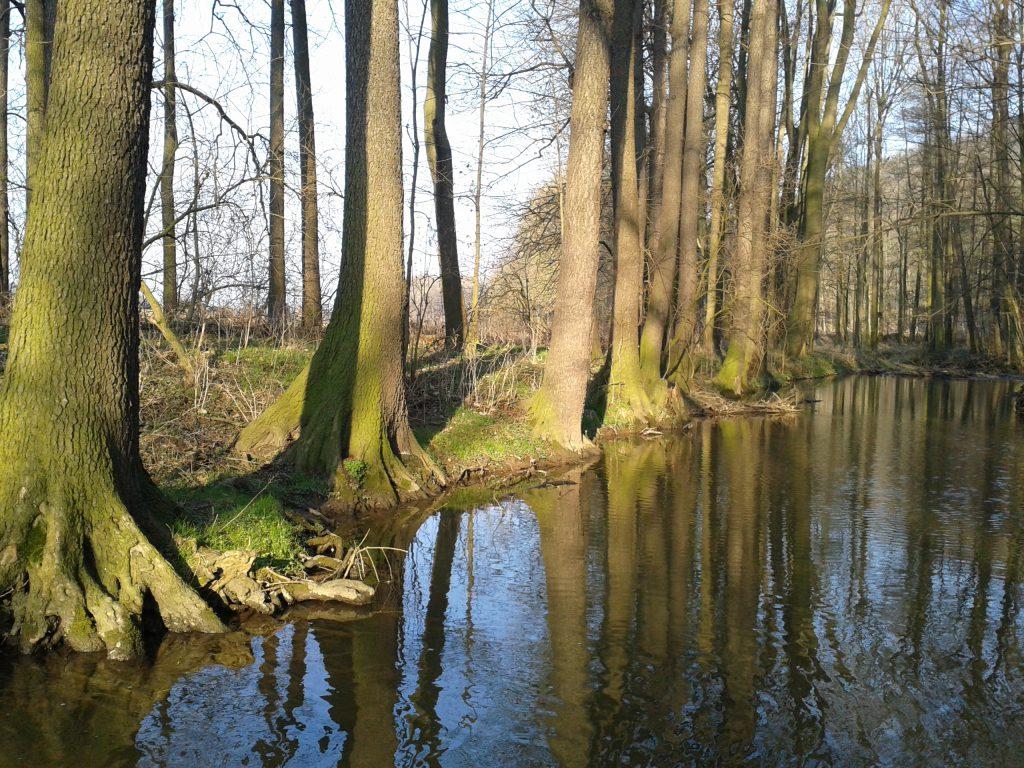 Auf im Winter idyllisch: Die Sprotte